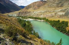 Turquoise river in the mountains. Altay Royalty Free Stock Photos