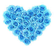 Turquoise roses in heart shape isolated royalty free stock photography