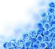 Turquoise Roses over white. Border Stock Image