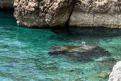 Turquoise sea, clean clear water. And rocks in Baška, the island of Krk Royalty Free Stock Photography