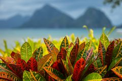 Turquoise sea and mountain background with tropical colorful leaves foreground in El Nido, Philippines. Turquoise sea and mountain background with tropical royalty free stock photo