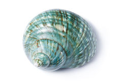 Turquoise Sea Shell Stock Images