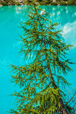 Turquoise Sorapis Lake with Pine Trees and Dolomite Mountains in Stock Photos