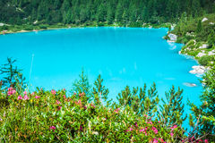 Turquoise Sorapis Lake with Pine Trees and Dolomite Mountains in. The Back - Sorapis Circuit, Dolomites, Italy, Europe royalty free stock photography