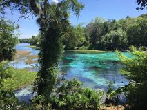 Turquoise Spring On River. With vibrant green foliage on a Rainbow River Rainbow Springs Florida Stock Photo