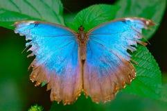 Turquoise sur une lame Photographie stock