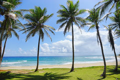 Turquoise tropical sea and wild beach with palm trees. In summer sunny day Stock Image