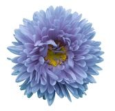 Turquoise-violet flower Aster on a white isolated background with clipping path. Flower for design, texture,  postcard, wrapper. Closeup.  Nature Stock Photo