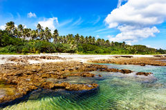 Turquoise water on lava beach. With palm trees in the background royalty free stock image