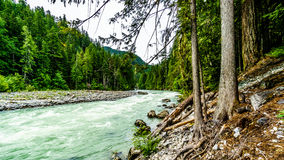 The turquoise water of the Lillooet River. Downstream of Nairn Falls in Nairn Falls Provincial Park between Whistler and Pemberton British Columbia Royalty Free Stock Images