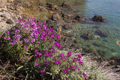 Turquoise water of mediterranean sea with pink flowers Stock Images
