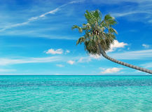 Turquoise water and palm Royalty Free Stock Photo