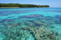 Turquoise water with reef below surface and island Royalty Free Stock Images