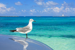 Turquoise waters of the caribbean sea a seagul. Caribbean destination with turquoise waters of the bay and a white seagul sitting stock photography