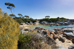 Turquoise waters with orange lichen growing on granite rocks, ro. Turquoise waters with orange lichen growing on granite rocks formations, rocky coastline at Stock Photo