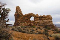 Turret Arch and Tree. Turret Arch in Arches National Park, Utah, USA Royalty Free Stock Photography