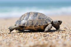 Turtel djur arkivfoton
