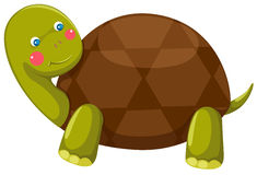 Turtle. Illustration of isolated cute turtle on white background vector illustration