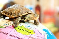 Turtle Stock Photography
