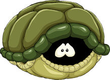 Turtle stock illustration