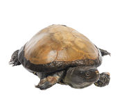 Turtle Stock Photos