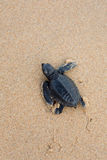 Turtle. S give birth and get out from sand Royalty Free Stock Image