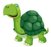 Turtle. Illustration of isolated turtle on white Royalty Free Stock Photography