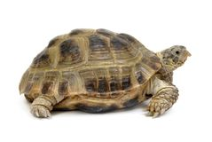 Free Turtle Stock Photography - 2795832