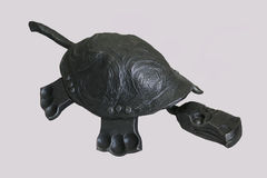 Turtle Stock Image