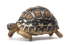 Turtle. Hand made clipping path included