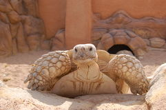Turtle. In zoo in one hotel of sharm el shekh Stock Photo