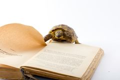 Turtle. The turtle thumbs through the book, turns pages Stock Photo