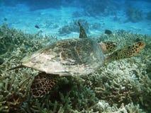 Free Turtle Stock Photos - 6820623