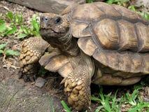 Free Turtle Stock Image - 7422361