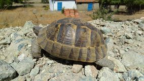 A turtle in the mediterranean stock images
