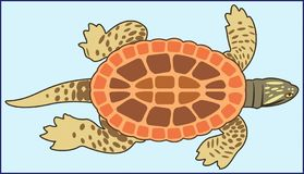 TURTLE ANIMAL AMPHIBIAN. Color image of an animal amphibian tortoise with shell and tail on a blue background stock illustration