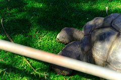 Turtle- Animal, Living Organism stock photography
