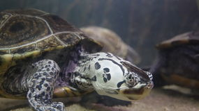 Turtle Animal Wildlife Stock Image