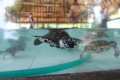 Turtle in aquarium Stock Photography