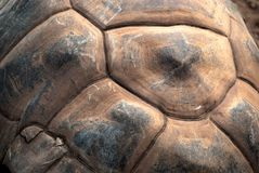 Turtle armor detail Stock Photo