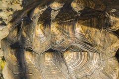 Turtle armour texture Stock Photos
