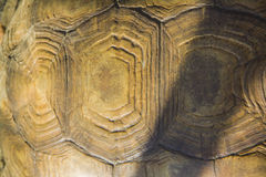 Turtle armour texture Stock Images