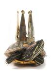 Turtle as nice princess Stock Image