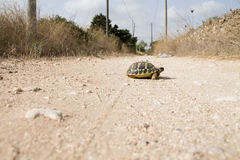Turtle baby walk alone Stock Photography