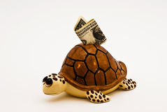 Turtle bank Royalty Free Stock Photo
