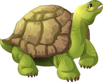 Turtle. Big turtle without a background Stock Photos