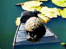 Turtle on a boat Stock Images
