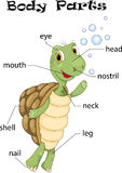 Turtle body parts Stock Images