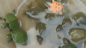 Turtle in a bowl stock footage