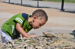 Turtle and boy3 Stock Photos